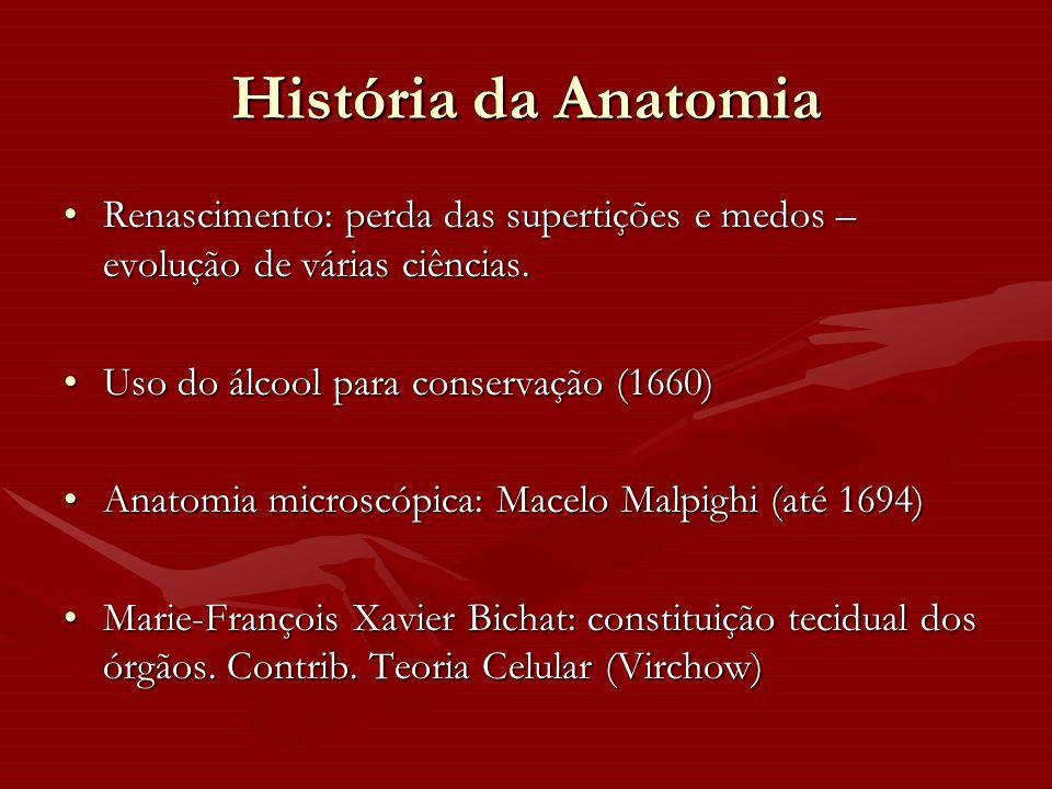 História da Anatomia Renascimento: perda das supertições e medos – evolução de várias ciências.Renascimento: perda das supertições e medos – evolução