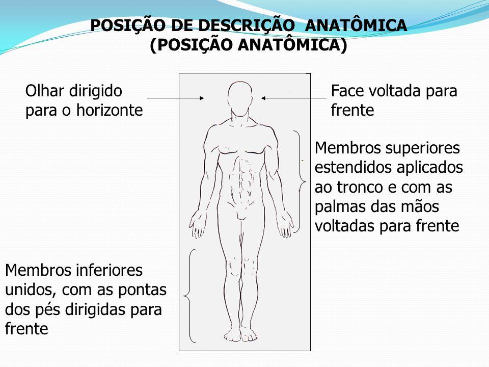 POSIÇÃO DE DESCRIÇÃO ANATÔMICA (POSIÇÃO ANATÔMICA) Face voltada para frente Olhar dirigido para o horizonte Membros superiores estendidos aplicados ao