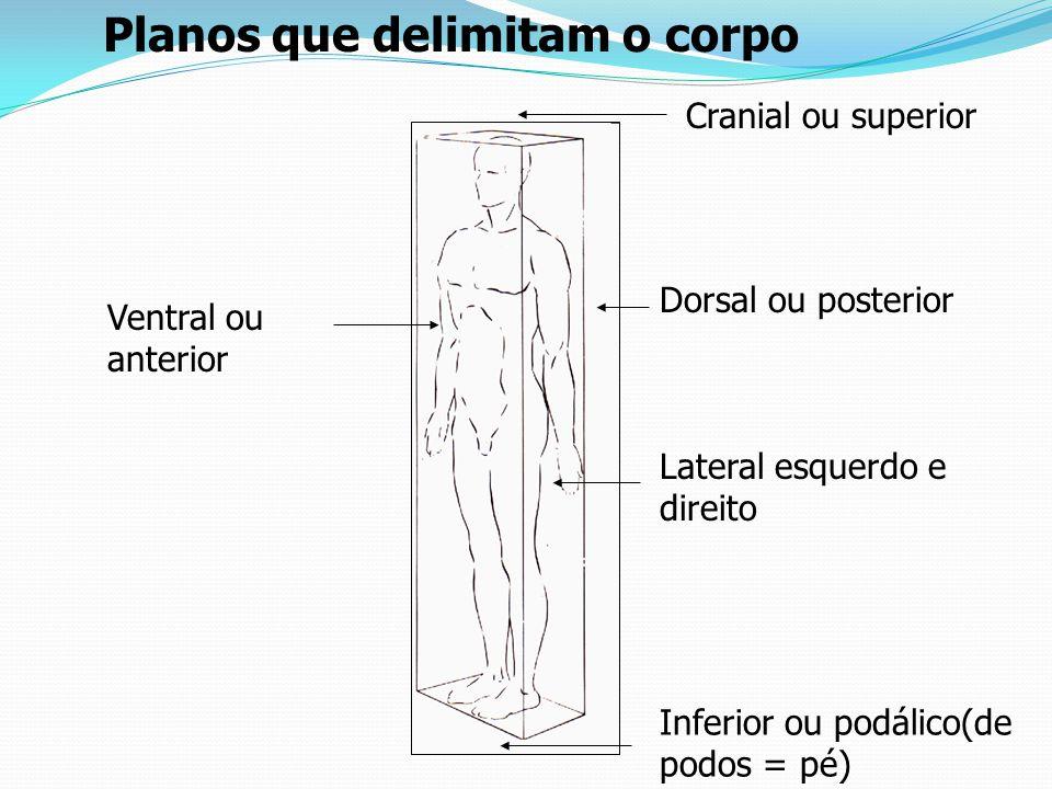 Ventral e dorsal – referem – se à frente e ao ventre e ao dorso do corpo e são sinônimos de anterior e posterior.
