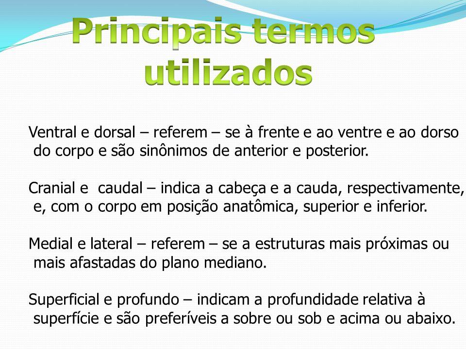 Ventral e dorsal – referem – se à frente e ao ventre e ao dorso do corpo e são sinônimos de anterior e posterior. Cranial e caudal – indica a cabeça e