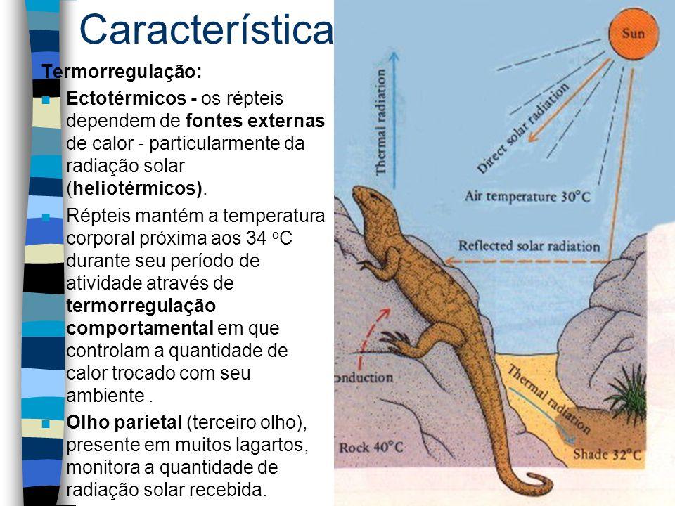 Características gerais Termorregulação: n Ectotérmicos - os répteis dependem de fontes externas de calor - particularmente da radiação solar (heliotér