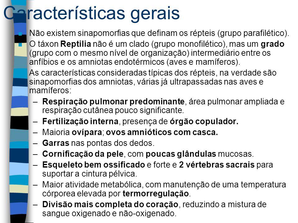Características gerais n Não existem sinapomorfias que definam os répteis (grupo parafilético). n O táxon Reptilia não é um clado (grupo monofilético)