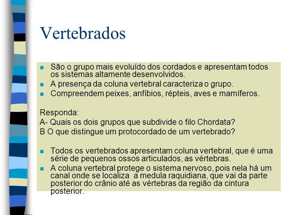 Vertebrados n São o grupo mais evoluído dos cordados e apresentam todos os sistemas altamente desenvolvidos. n A presença da coluna vertebral caracter