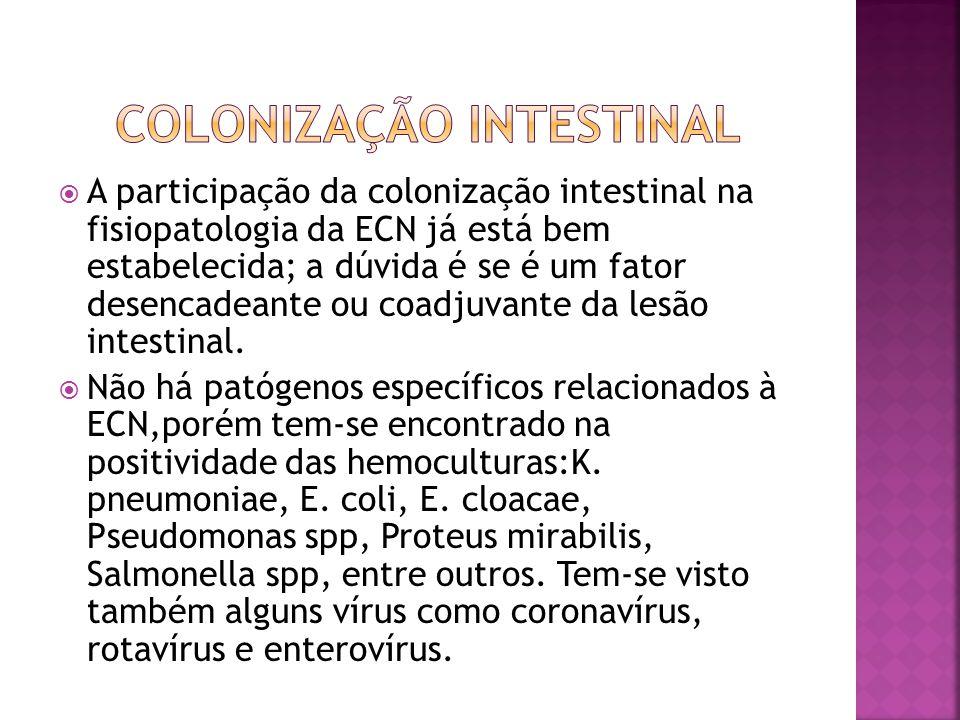  A participação da colonização intestinal na fisiopatologia da ECN já está bem estabelecida; a dúvida é se é um fator desencadeante ou coadjuvante da