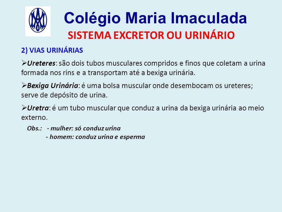 Colégio Maria Imaculada SISTEMA EXCRETOR OU URINÁRIO 2) VIAS URINÁRIAS  Ureteres: são dois tubos musculares compridos e finos que coletam a urina formada nos rins e a transportam até a bexiga urinária.