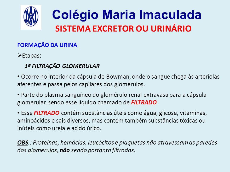 Colégio Maria Imaculada SISTEMA EXCRETOR OU URINÁRIO FORMAÇÃO DA URINA  Etapas: 1ª FILTRAÇÃO GLOMERULAR Ocorre no interior da cápsula de Bowman, onde o sangue chega às arteríolas aferentes e passa pelos capilares dos glomérulos.