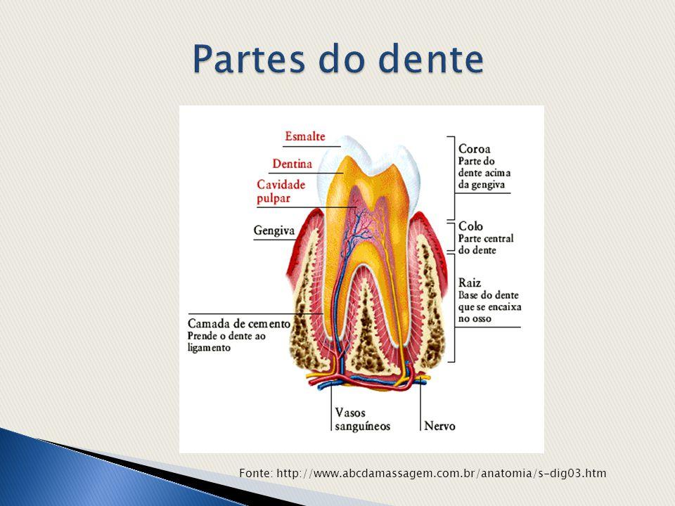 Fonte: http://www.abcdamassagem.com.br/anatomia/s-dig03.htm