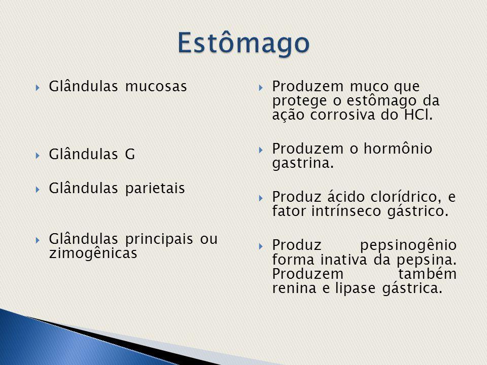  Glândulas mucosas  Glândulas G  Glândulas parietais  Glândulas principais ou zimogênicas  Produzem muco que protege o estômago da ação corrosiva