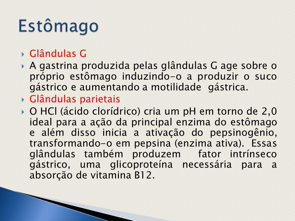  Glândulas G  A gastrina produzida pelas glândulas G age sobre o próprio estômago induzindo-o a produzir o suco gástrico e aumentando a motilidade g