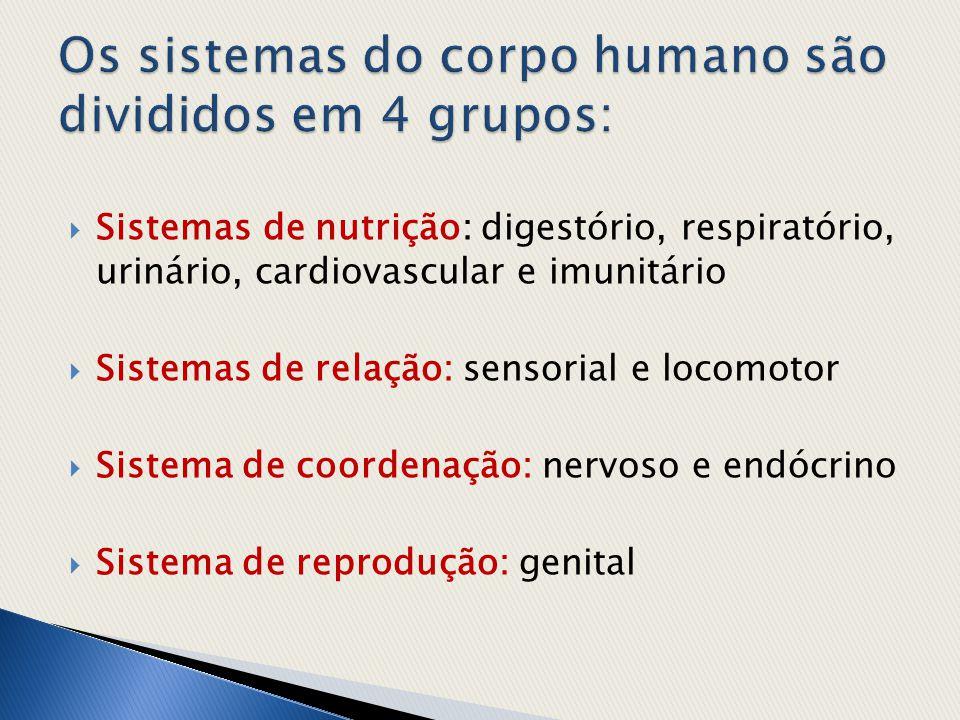  Sistemas de nutrição: digestório, respiratório, urinário, cardiovascular e imunitário  Sistemas de relação: sensorial e locomotor  Sistema de coor