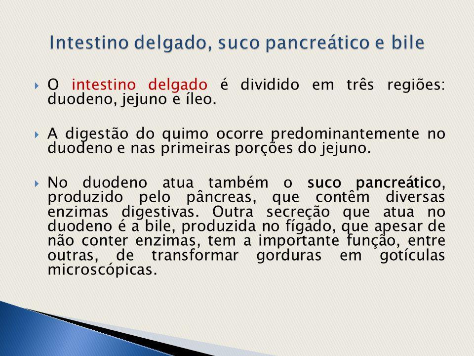  O intestino delgado é dividido em três regiões: duodeno, jejuno e íleo.  A digestão do quimo ocorre predominantemente no duodeno e nas primeiras po