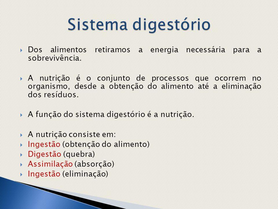  O sistema digestório humano é completo (tem boca e ânus) e a digestão é extracelular (ocorre fora das células).