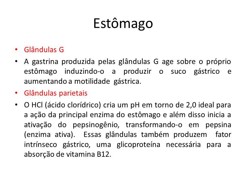 Estômago Glândulas G A gastrina produzida pelas glândulas G age sobre o próprio estômago induzindo-o a produzir o suco gástrico e aumentando a motilid