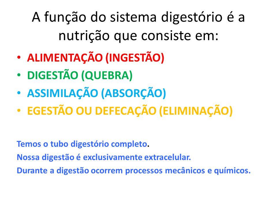 A função do sistema digestório é a nutrição que consiste em: ALIMENTAÇÃO (INGESTÃO) DIGESTÃO (QUEBRA) ASSIMILAÇÃO (ABSORÇÃO) EGESTÃO OU DEFECAÇÃO (ELI