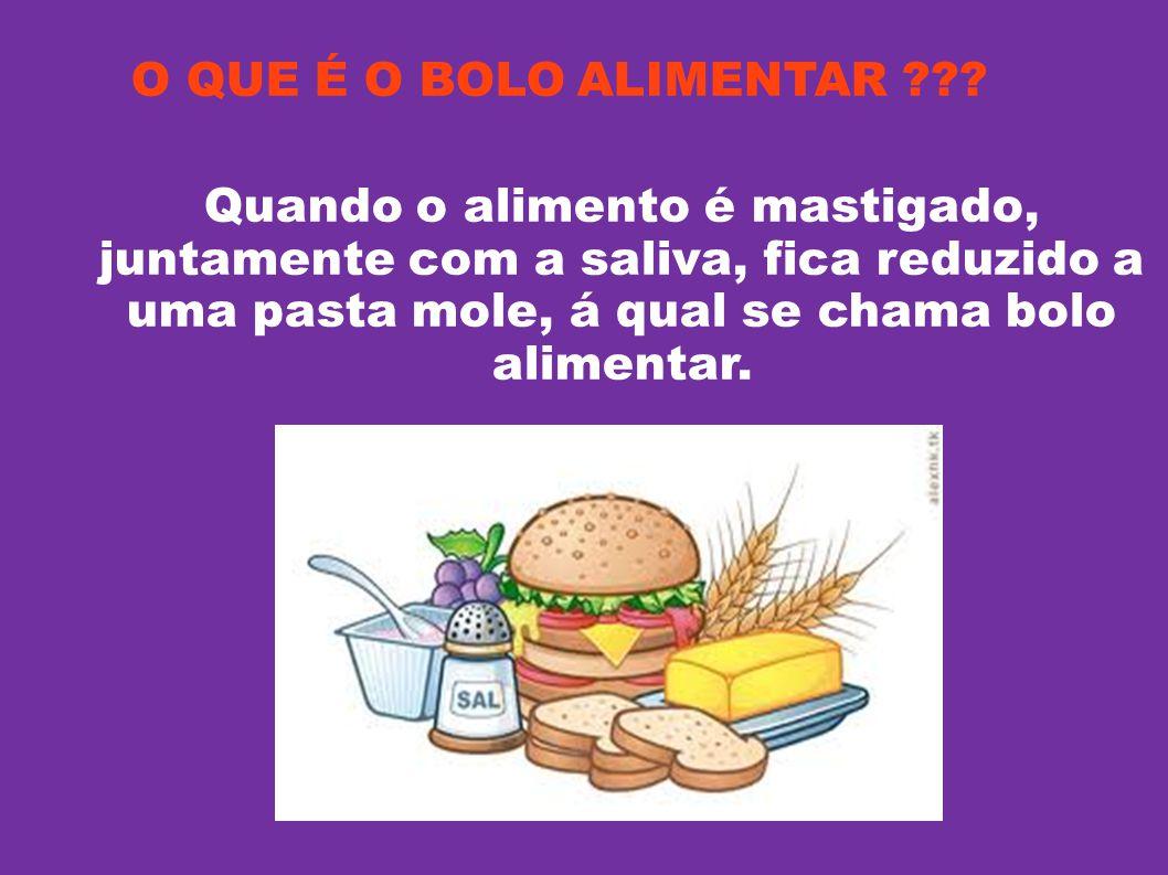 O QUE É O BOLO ALIMENTAR ??? Quando o alimento é mastigado, juntamente com a saliva, fica reduzido a uma pasta mole, á qual se chama bolo alimentar.