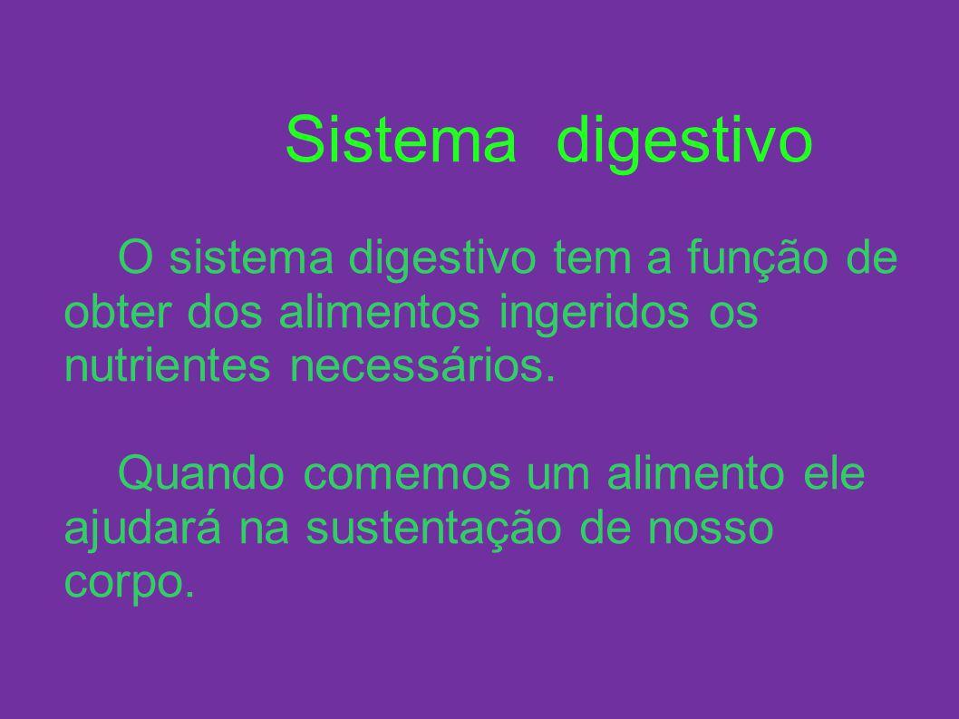 Sistema digestivo O sistema digestivo tem a função de obter dos alimentos ingeridos os nutrientes necessários. Quando comemos um alimento ele ajudará