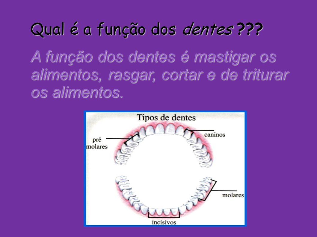 Qual é a função dos dentes ??? A função dos dentes é mastigar os alimentos, rasgar, cortar e de triturar os alimentos.