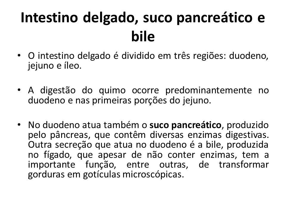 Intestino delgado, suco pancreático e bile O intestino delgado é dividido em três regiões: duodeno, jejuno e íleo. A digestão do quimo ocorre predomin