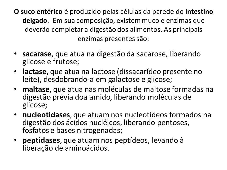 O suco entérico é produzido pelas células da parede do intestino delgado. Em sua composição, existem muco e enzimas que deverão completar a digestão d