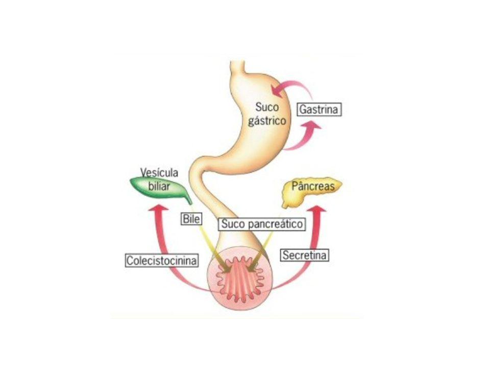 Intestino Grosso O intestino grosso tem um importante trabalho na absorção da água (o que determina a consistência do bolo fecal).