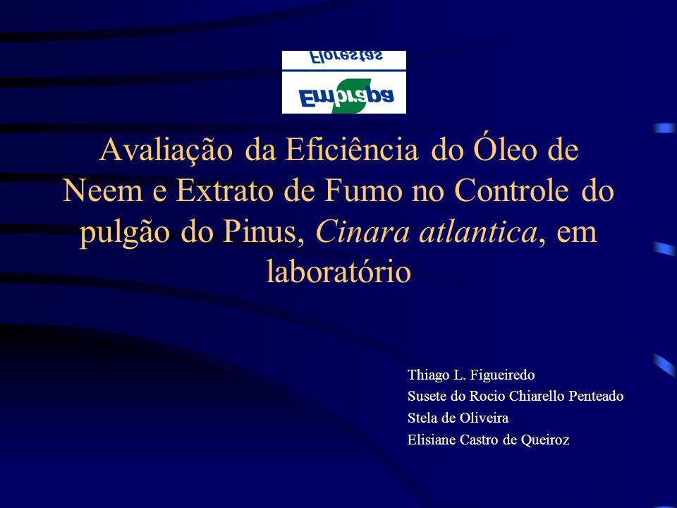 Avaliação da Eficiência do Óleo de Neem e Extrato de Fumo no Controle do pulgão do Pinus, Cinara atlantica, em laboratório Thiago L. Figueiredo Susete