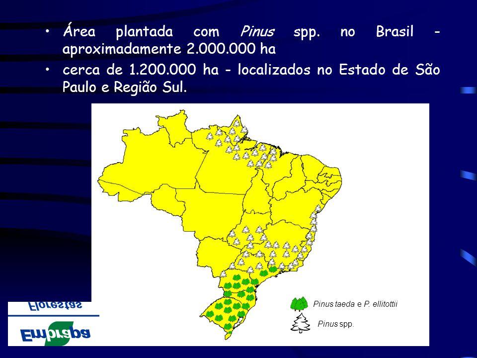 Área plantada com Pinus spp. no Brasil - aproximadamente 2.000.000 ha cerca de 1.200.000 ha - localizados no Estado de São Paulo e Região Sul. Pinus t