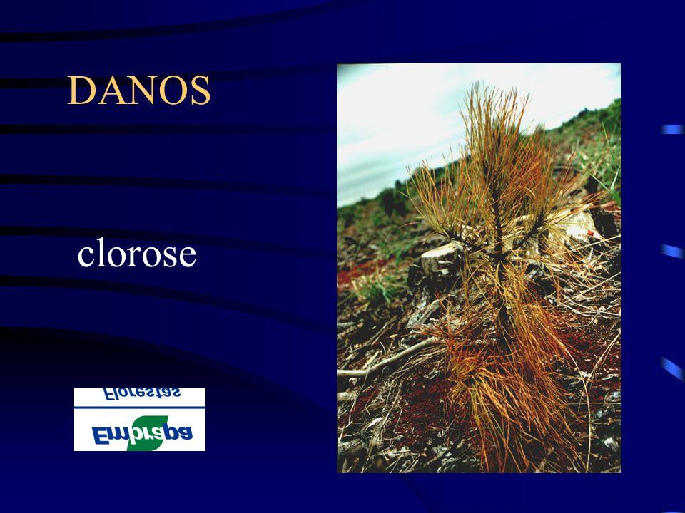 DANOS clorose