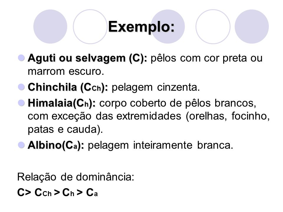 Exemplo: Aguti ou selvagem (C): Aguti ou selvagem (C): pêlos com cor preta ou marrom escuro. Chinchila (C Ch ): Chinchila (C Ch ): pelagem cinzenta. H