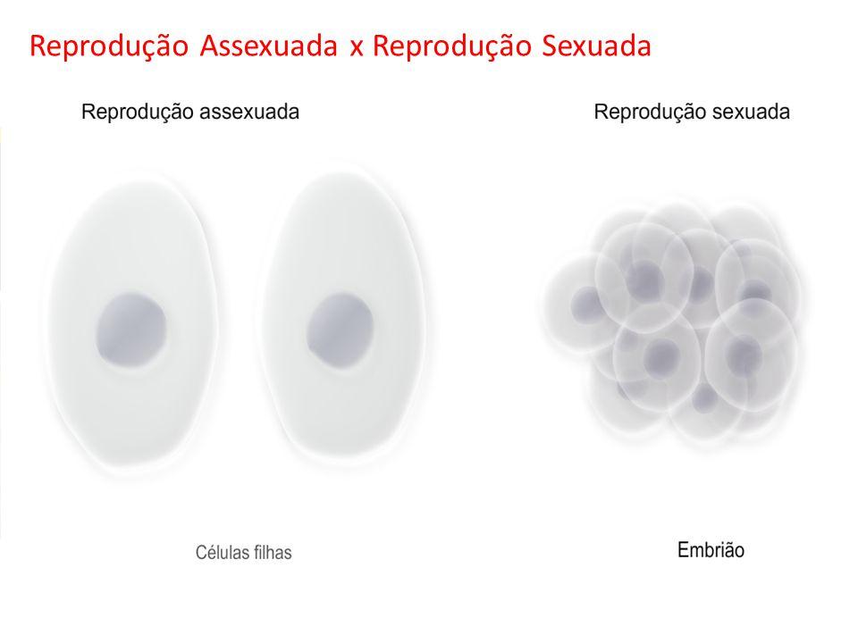 Mitose 2 n Clonagem Sem variabilidade genética Divisões celulares