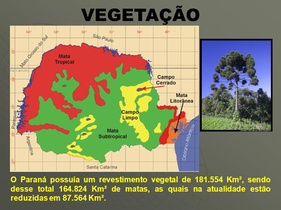 VEGETAÇÃO O Paraná possuía um revestimento vegetal de 181.554 Km², sendo desse total 164.824 Km² de matas, as quais na atualidade estão reduzidas em 87.564 Km².