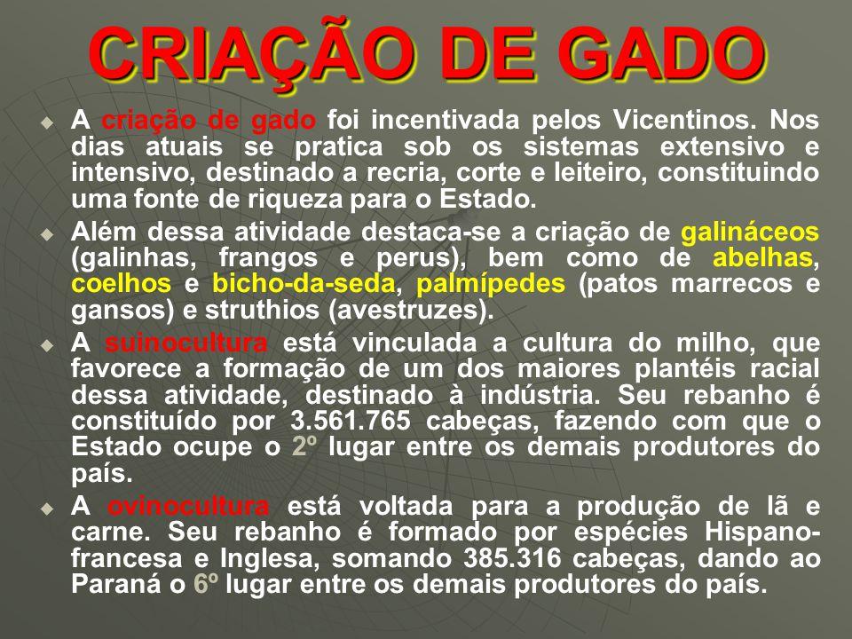 CRIAÇÃO DE GADO   A criação de gado foi incentivada pelos Vicentinos.