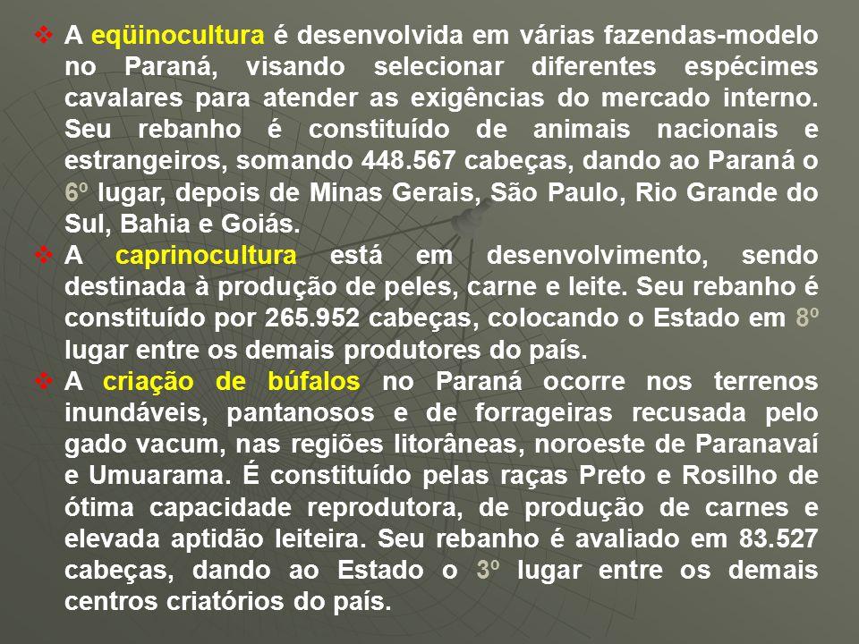  A eqüinocultura é desenvolvida em várias fazendas-modelo no Paraná, visando selecionar diferentes espécimes cavalares para atender as exigências do mercado interno.