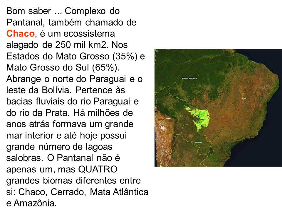 Bom saber... Complexo do Pantanal, também chamado de Chaco, é um ecossistema alagado de 250 mil km2. Nos Estados do Mato Grosso (35%) e Mato Grosso do
