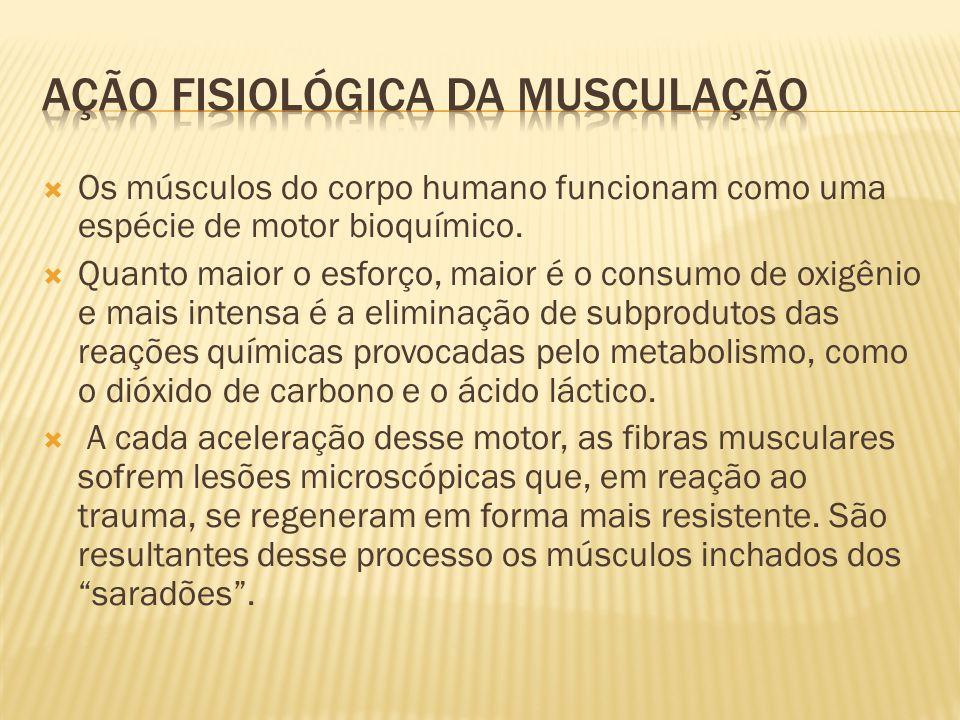  Os músculos do corpo humano funcionam como uma espécie de motor bioquímico.  Quanto maior o esforço, maior é o consumo de oxigênio e mais intensa é