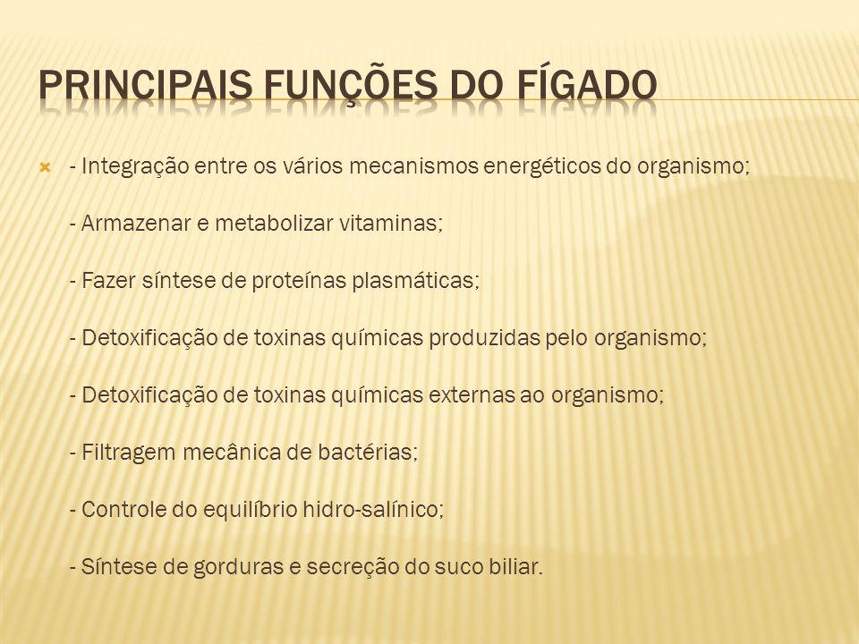  - Integração entre os vários mecanismos energéticos do organismo; - Armazenar e metabolizar vitaminas; - Fazer síntese de proteínas plasmáticas; - D