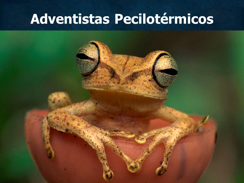 Adventistas Pecilotérmicos
