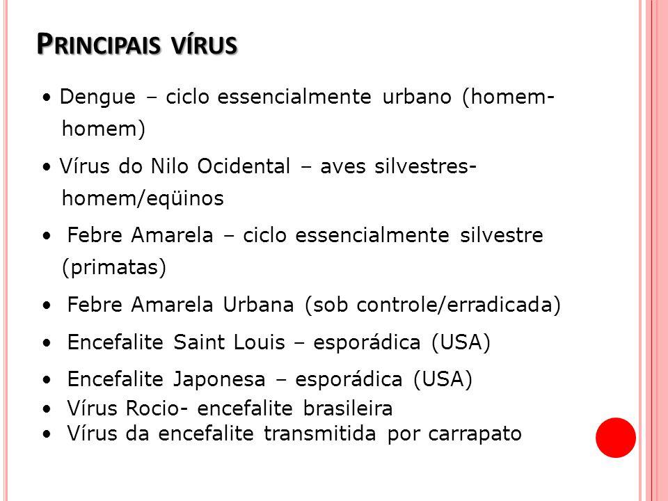 P RINCIPAIS VÍRUS Dengue – ciclo essencialmente urbano (homem- homem) Vírus do Nilo Ocidental – aves silvestres- homem/eqüinos Febre Amarela – ciclo e