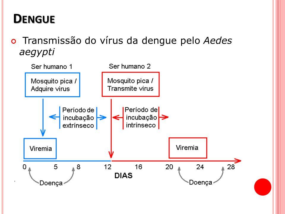 D ENGUE Transmissão do vírus da dengue pelo Aedes aegypti