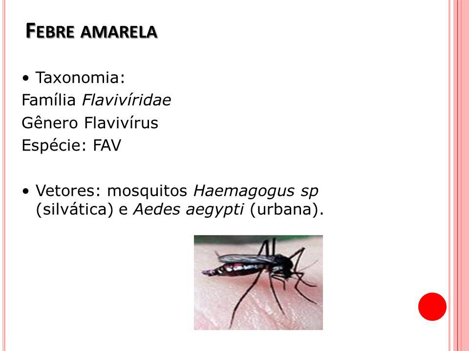 F EBRE AMARELA Taxonomia: Família Flavivíridae Gênero Flavivírus Espécie: FAV Vetores: mosquitos Haemagogus sp (silvática) e Aedes aegypti (urbana).