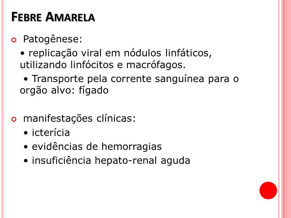 F EBRE A MARELA Patogênese: replicação viral em nódulos linfáticos, utilizando linfócitos e macrófagos. Transporte pela corrente sanguínea para o orgã