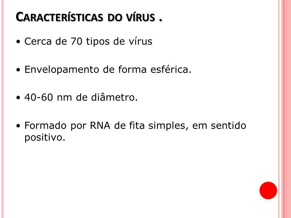 C ARACTERÍSTICAS DO VÍRUS. Cerca de 70 tipos de vírus Envelopamento de forma esférica. 40-60 nm de diâmetro. Formado por RNA de fita simples, em senti