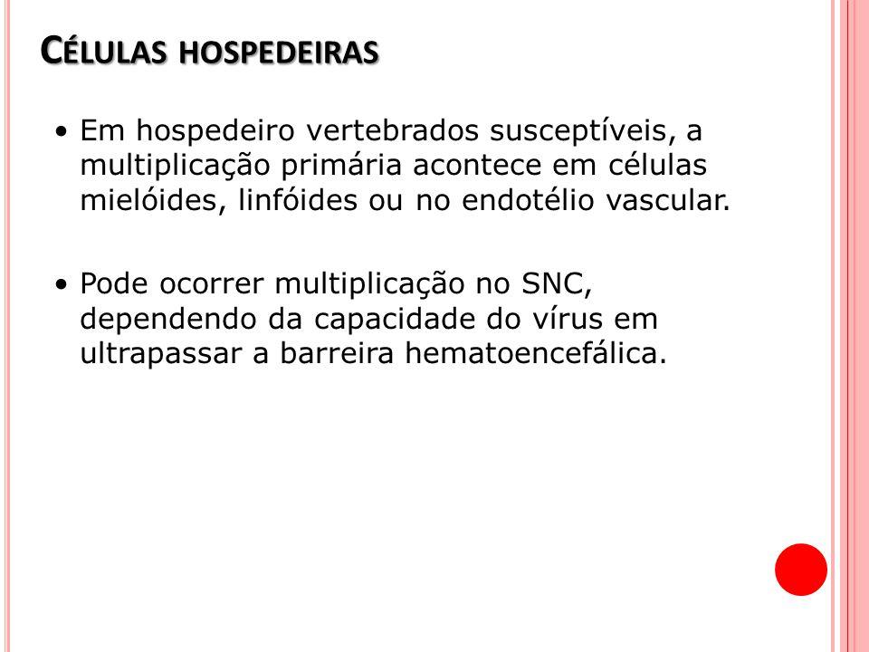 C ÉLULAS HOSPEDEIRAS Em hospedeiro vertebrados susceptíveis, a multiplicação primária acontece em células mielóides, linfóides ou no endotélio vascula
