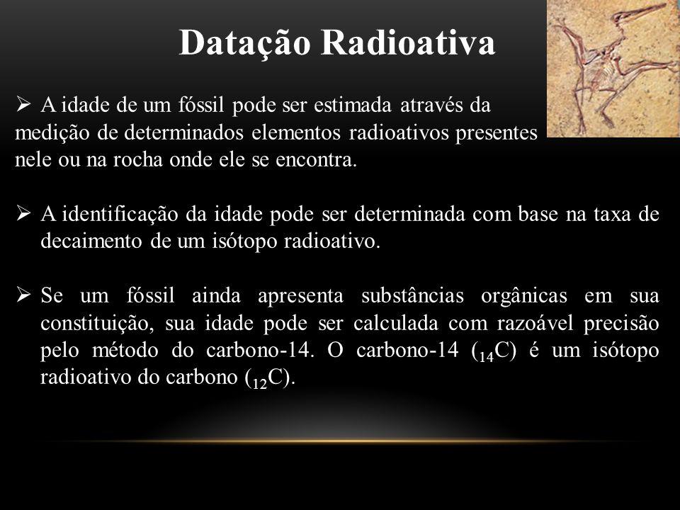 Datação Radioativa  A idade de um fóssil pode ser estimada através da medição de determinados elementos radioativos presentes nele ou na rocha onde e