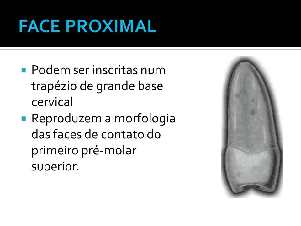  Podem ser inscritas num trapézio de grande base cervical  Reproduzem a morfologia das faces de contato do primeiro pré-molar superior.