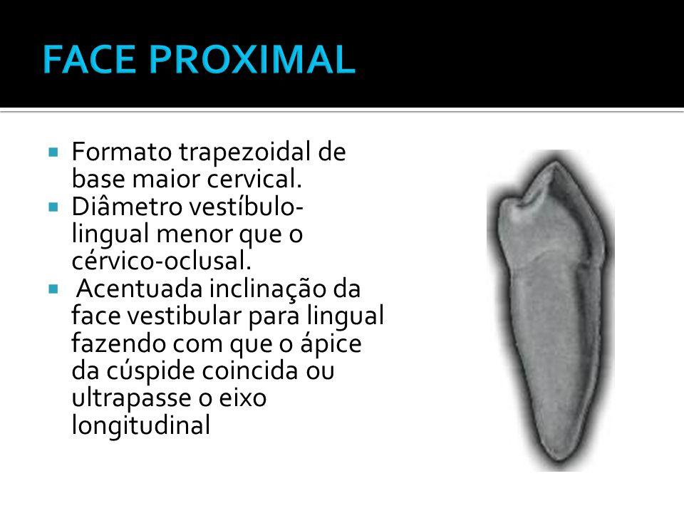  Formato trapezoidal de base maior cervical.  Diâmetro vestíbulo- lingual menor que o cérvico-oclusal.  Acentuada inclinação da face vestibular par