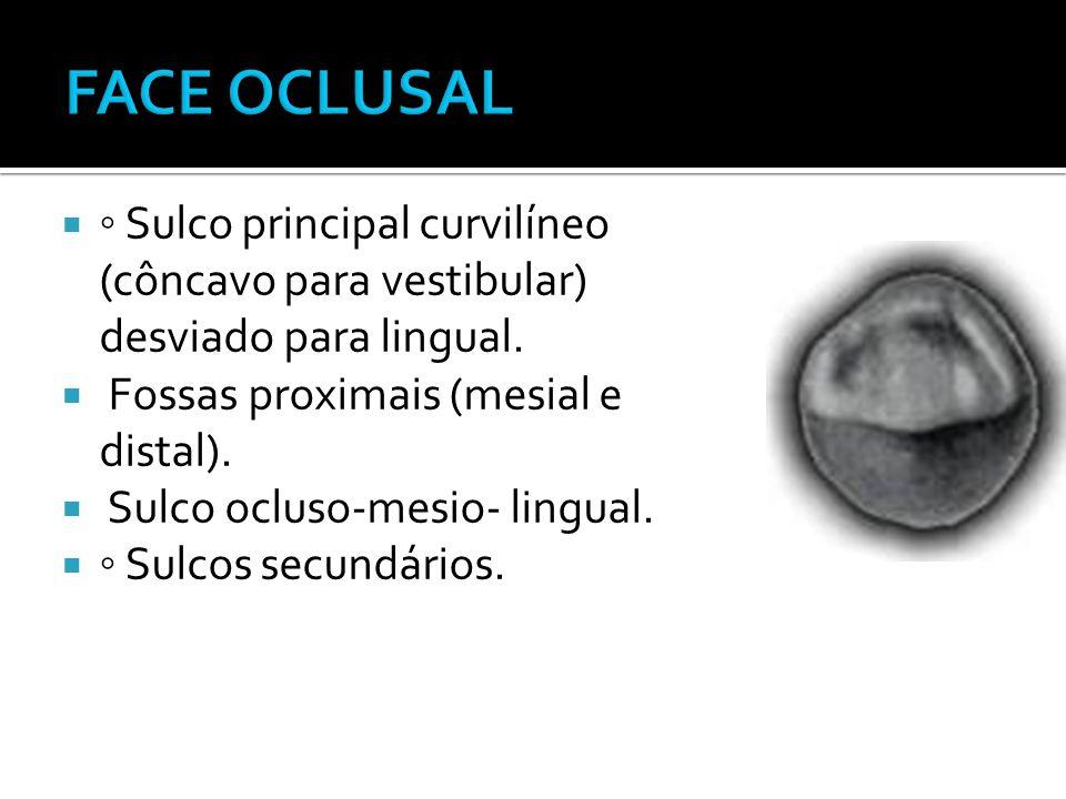  ◦ Sulco principal curvilíneo (côncavo para vestibular) desviado para lingual.  Fossas proximais (mesial e distal).  Sulco ocluso-mesio- lingual. 