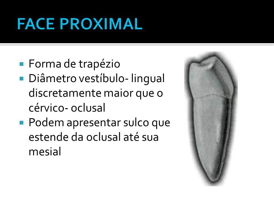  Forma de trapézio  Diâmetro vestíbulo- lingual discretamente maior que o cérvico- oclusal  Podem apresentar sulco que estende da oclusal até sua m
