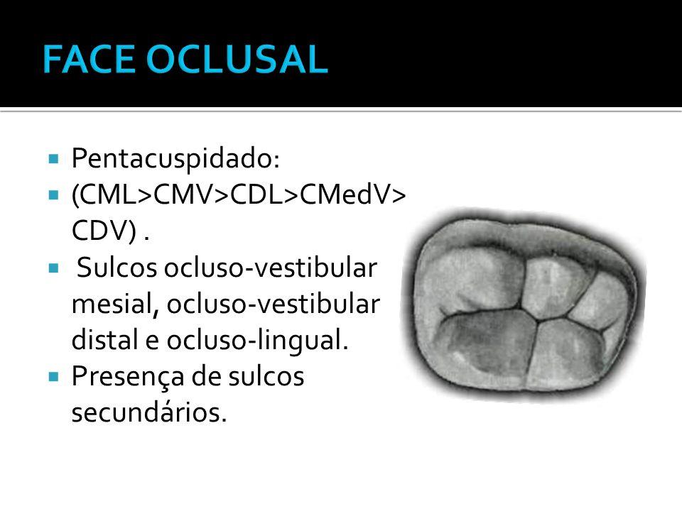  Pentacuspidado:  (CML>CMV>CDL>CMedV> CDV).  Sulcos ocluso-vestibular mesial, ocluso-vestibular distal e ocluso-lingual.  Presença de sulcos secun