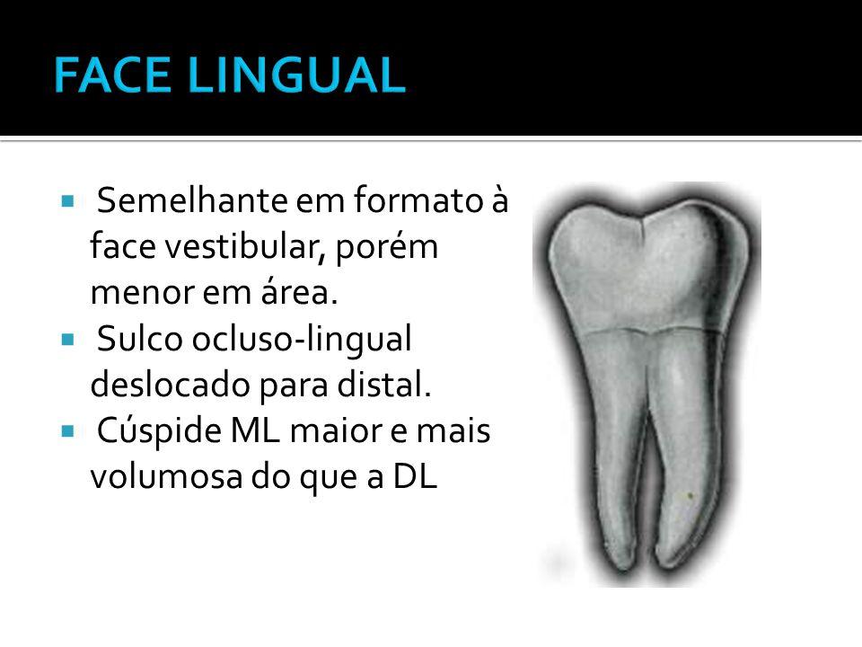  Semelhante em formato à face vestibular, porém menor em área.  Sulco ocluso-lingual deslocado para distal.  Cúspide ML maior e mais volumosa do qu
