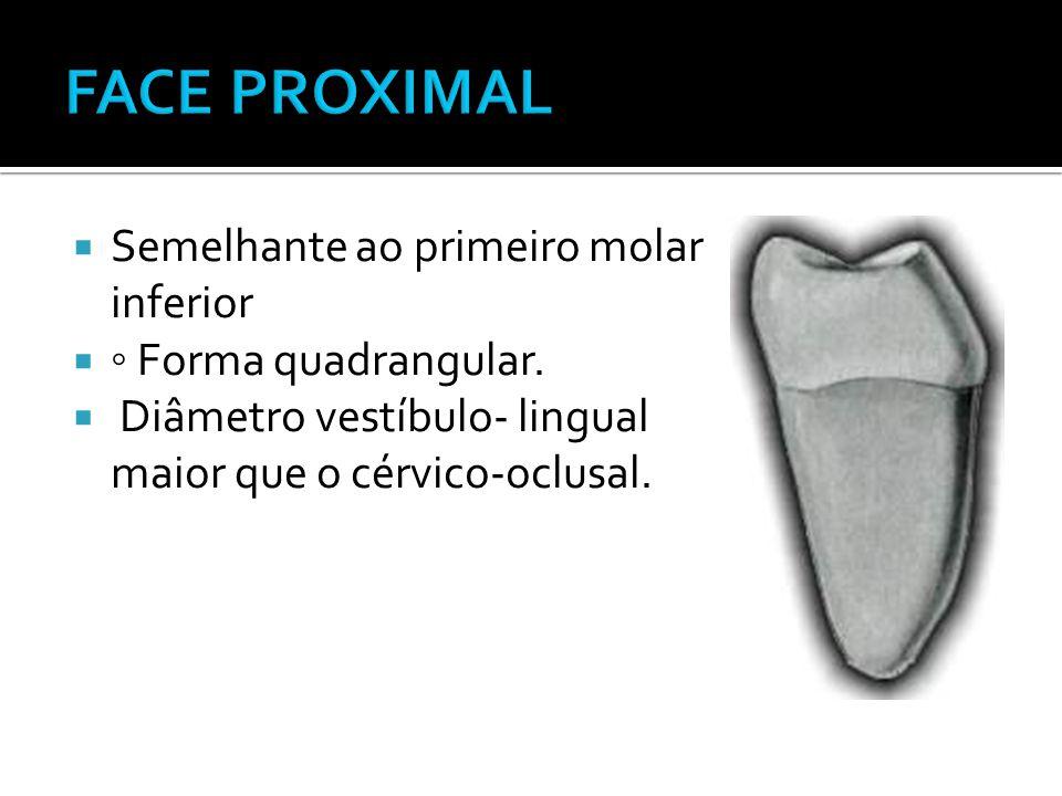  Semelhante ao primeiro molar inferior  ◦ Forma quadrangular.  Diâmetro vestíbulo- lingual maior que o cérvico-oclusal.